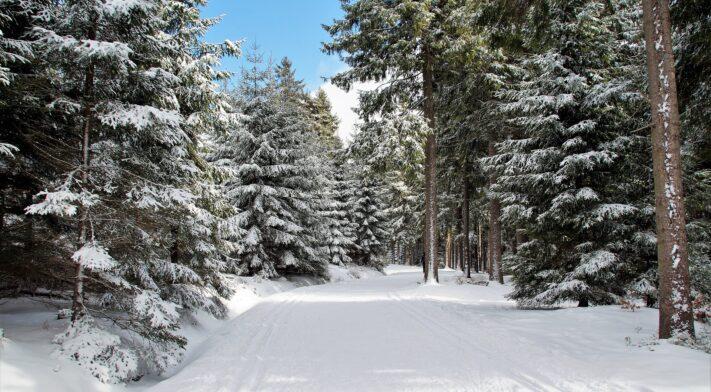 sentier course hivernale